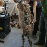 Mangey cat puppet